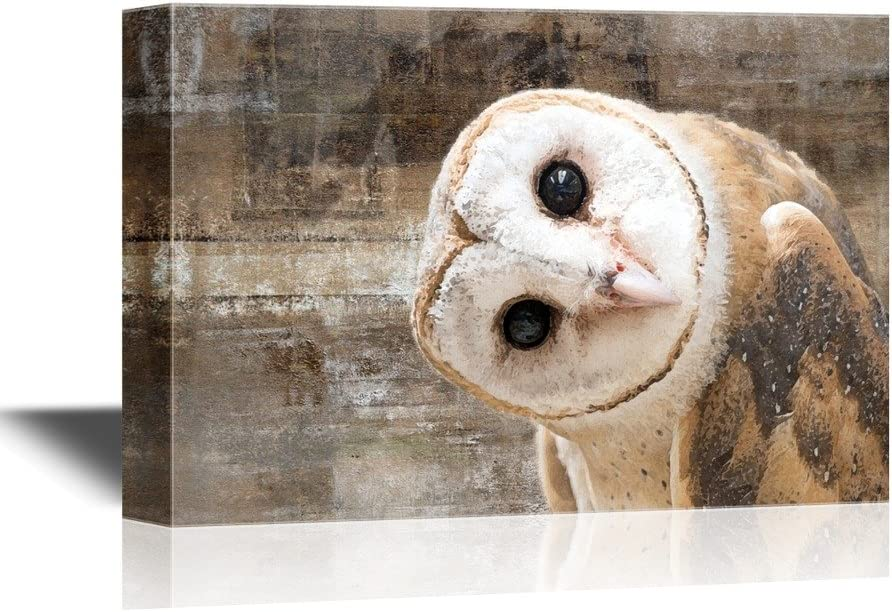 wall26 - Canvas Wall Art - Common Barn Owl (Tyto Albahead) Head Close Up - Gallery Wrap Modern Home Art | Ready to Hang - 16x24 inches