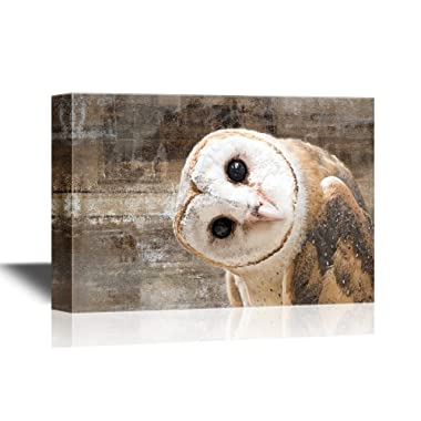 wall26 Canvas Wall Art - Common Barn Owl (Tyto Albahead) Head Close Up - Gallery Wrap Modern Home Decor | Ready to Hang - 16x24 inches