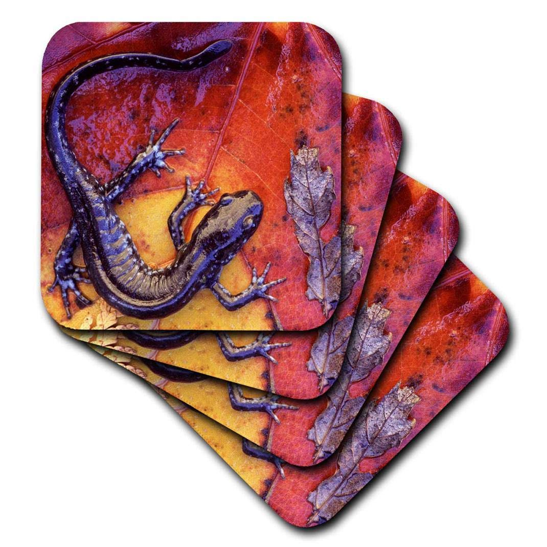 Blue-Spotted Salamander Lizards-Cn10 Bja0023-Janyes Gallery-Soft Coasters 3dRose CST/_73117/_1 Quebec Set of 4