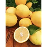 Kejora Fresh MEYER LEMONS - 5 lbs