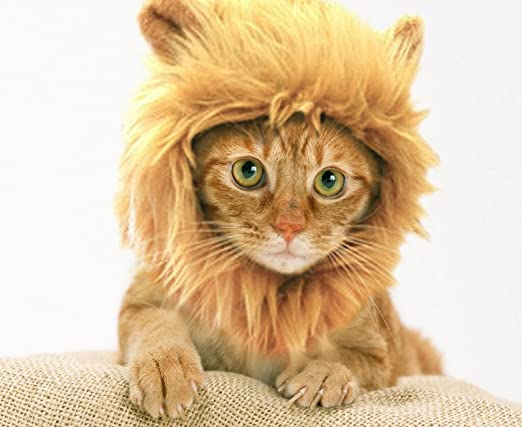 Turns Your Cat  Into a Ferocious Lion King!