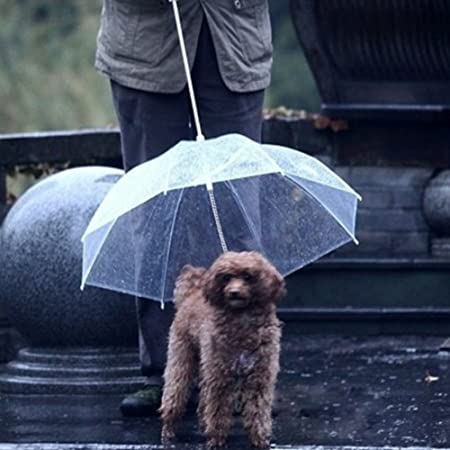 Sotoboo Paraguas para Mascotas (Paraguas para Perro/Gato), Correa de Perro, Transparente, Impermeable, Paraguas para Mascotas para Paseos Secos en la Lluvia ...