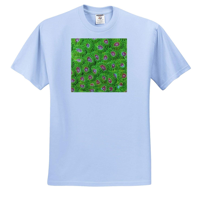 Hard Coral Underwater ts/_314025 3dRose Danita Delimont - Adult T-Shirt XL