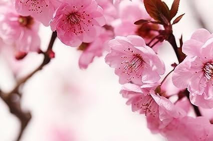 Fotomurale Fiore Di Pesco 31p 350x260 Cm 7 Striscia Di Carta Da
