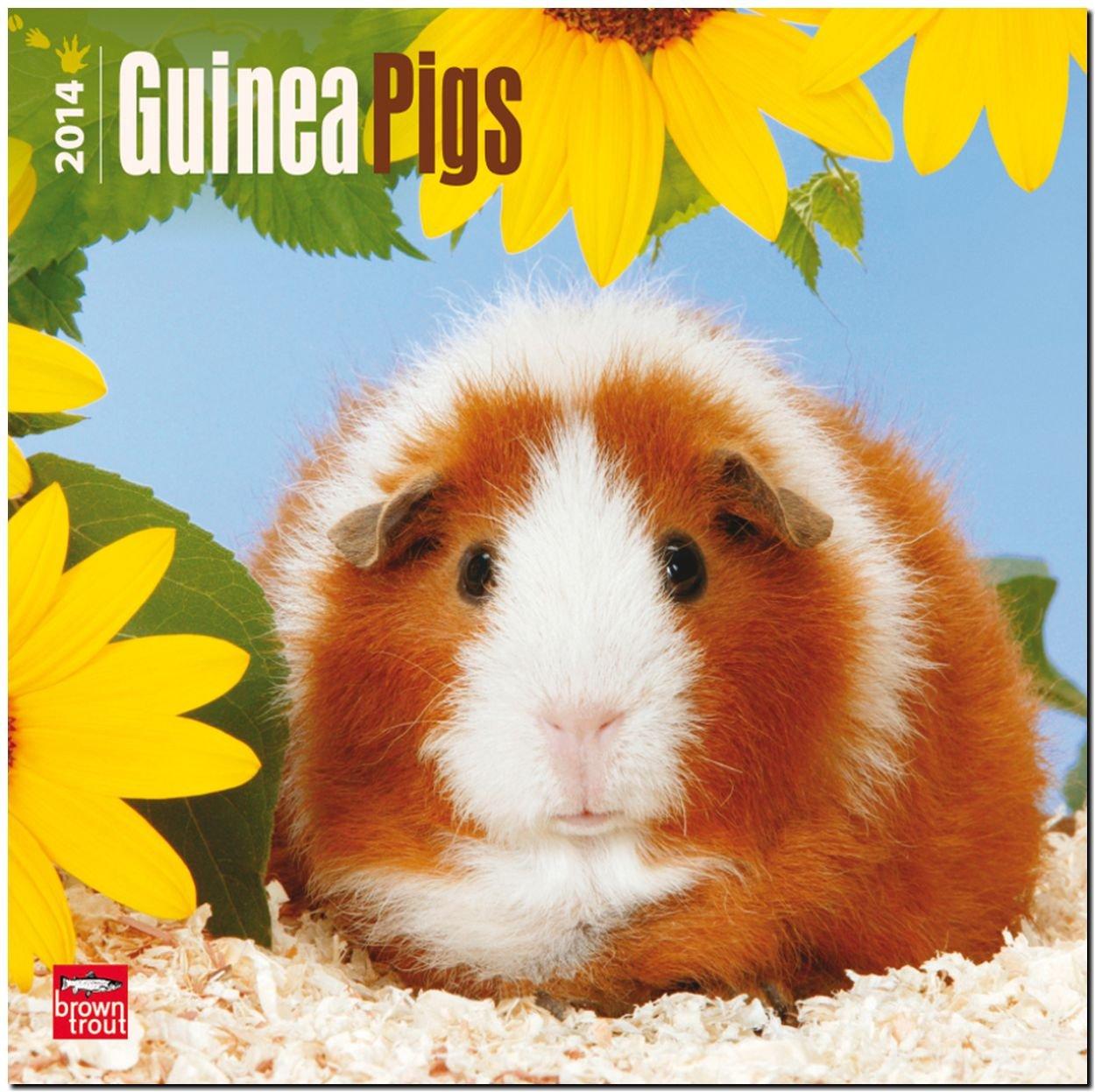 Guinea Pigs 2014 Calendar, 18-Month Calendar (Multilingual Edition)