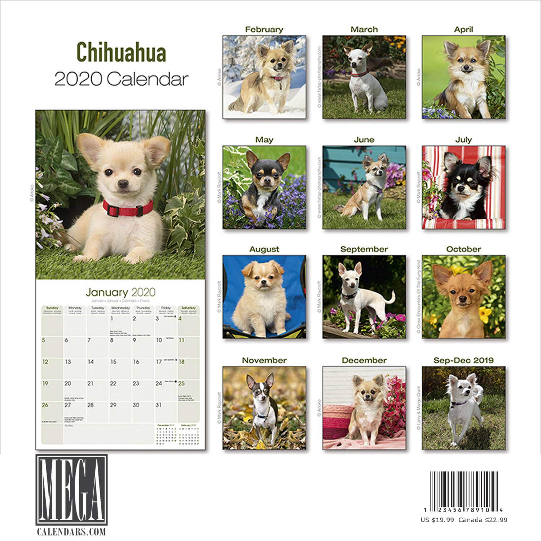 Chihuahua Calendar 2020 Dog Breed Calendar Wall Calendar 2019 2020