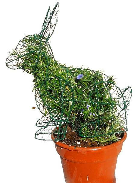 Sentado conejo 14 pulgadas de alto W/Romero Topiary marco, hecho a ...