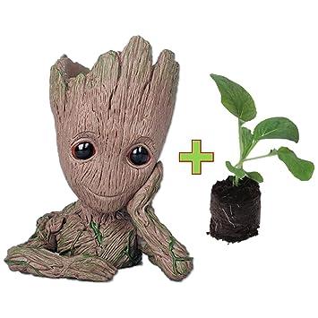 Pot De Fleur Groot Avec Kit De Plantation Facile Inclus Pastille