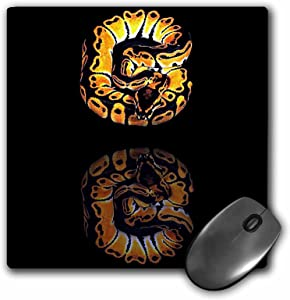 3dRose LLC 8 x 8 x 0.25 Inches Mouse Pad, Ball Python (mp_887_1)