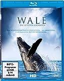 Wale - Die letzten Giganten [Blu-ray]