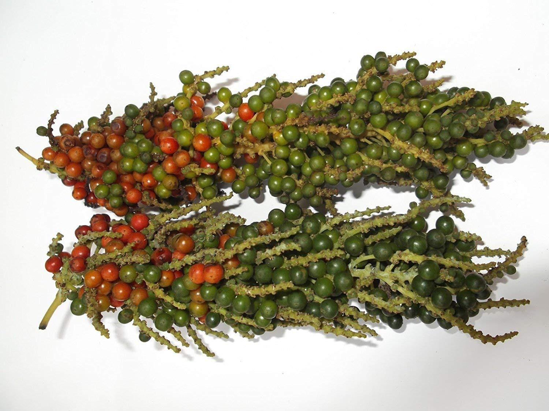 Farmerly Rare Tropical Thekkan Bunch Lot de 20 graines de Poivre Noir