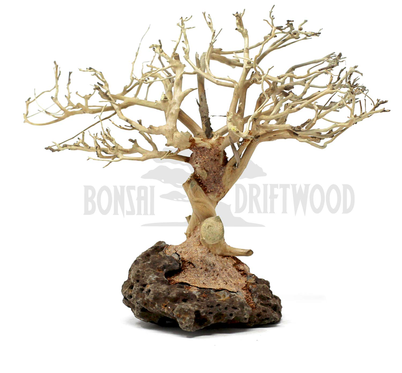 Bonsai Driftwood Random Pick Aquarium Decoration Tree, Moss Tree, Aquarium Driftwood Tree, Aquarium Tree (6 Inch Height) Natural, Handcrafted Fish Tank Decoration   Helps Balance pH by Bonsai Driftwood
