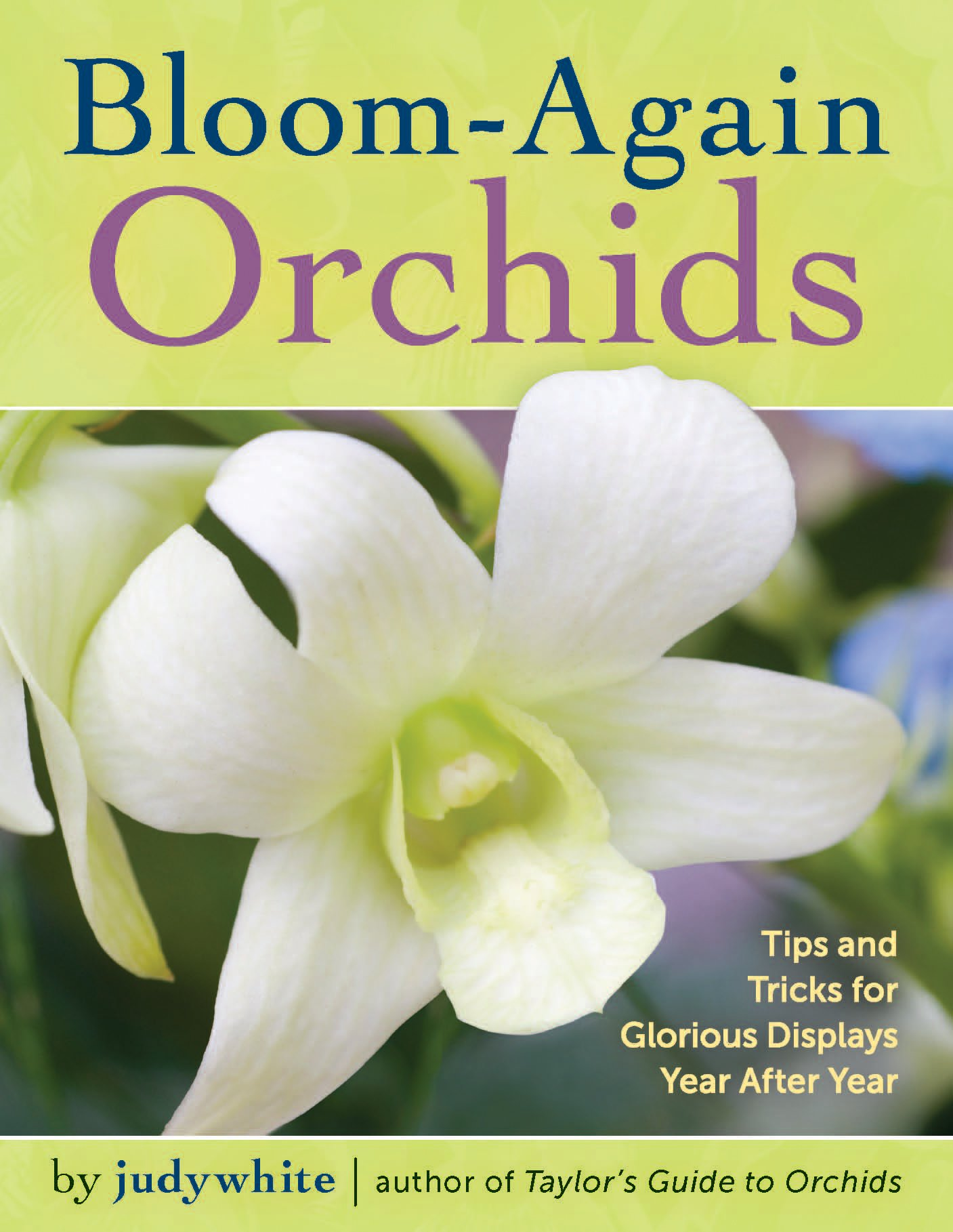 Bloom Again Orchids 50 Easy Care Orchids That Flower Again And