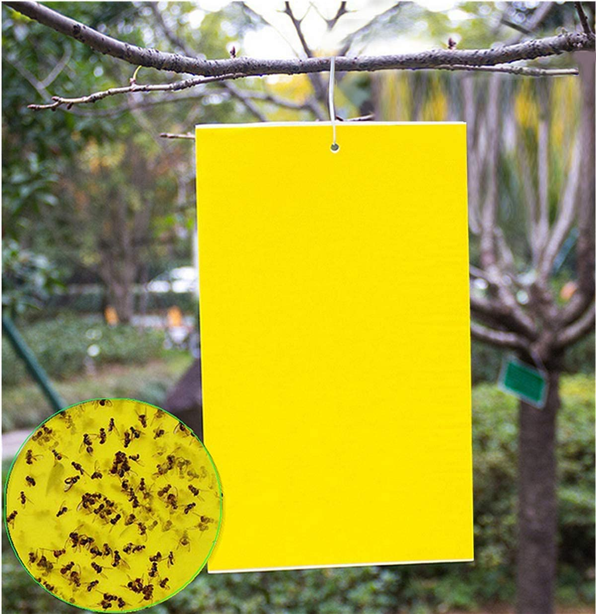20 Count Dual Yellow Sticky Traps 8 X 6 Inch Set for Flying Plant Insect Like Fungus Gnats, Aphids, Whiteflies, Leafminers -Included 20pcs Twist Ties