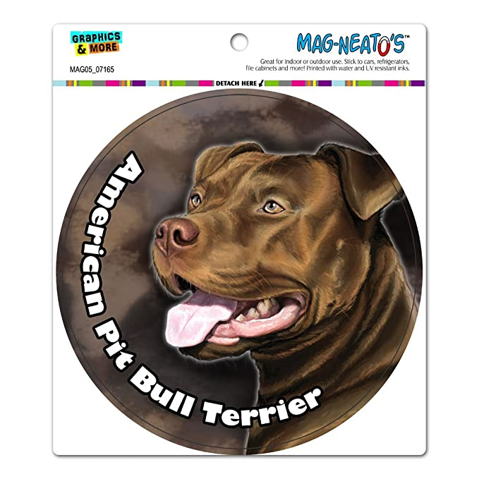 american pit bull terrier pitbull red nose dog pet circle mag