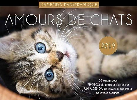 Agenda panorámica amours de gatos 2019