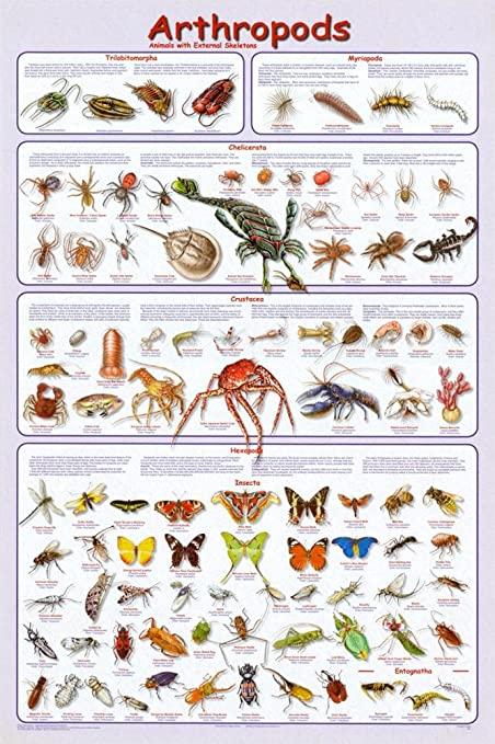amazon com laminated arthropods insects educational science chart Arthropoda Grasshopper image unavailable