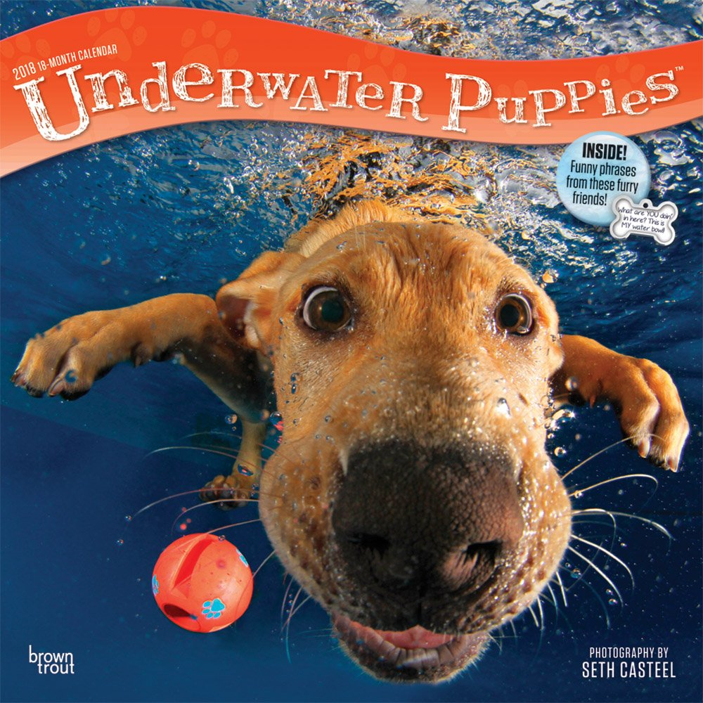 Download Underwater Puppies 2018 12 x 12 Inch Monthly Square Wall Calendar, Pet Humor Puppy (Multilingual Edition) PDF