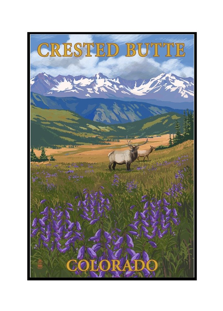 Crested Butte、コロラド – Elkと花 12 x 18 Framed Gallery Canvas LANT-3P-FC-80558-12x18 12 x 18 Framed Gallery Canvas  B072Q17WMG