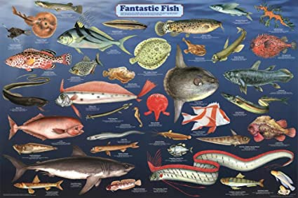 Laminated Fantastic Fish Educational Science Chart Poster 36 X 24in