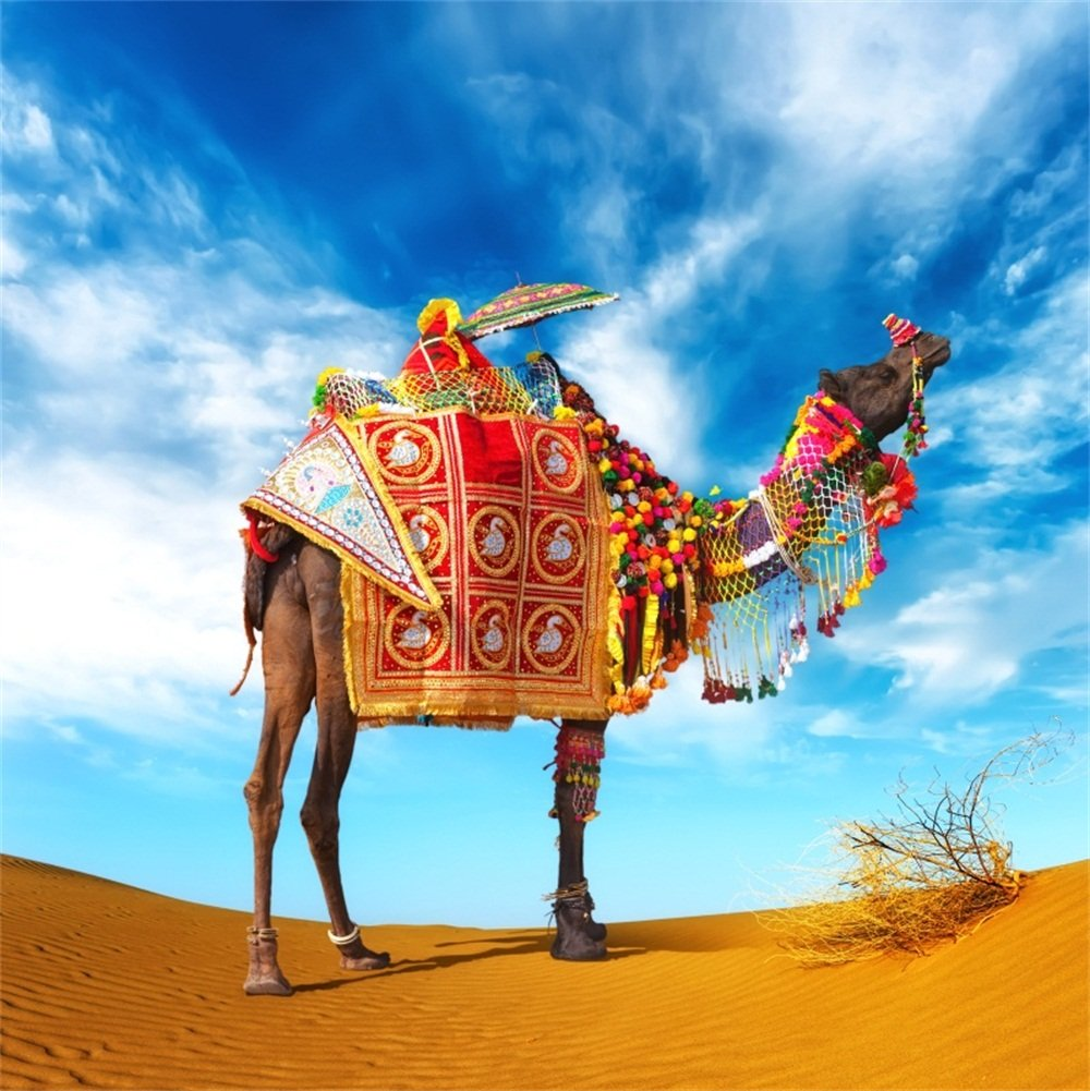 lfeey 6 x 6ft Western Desert Camel写真バックドロップイエローDry Sands ERG絶妙な装飾Caravanキャメル背景のビデオパーティYoutubeフォトスタジオ小道具   B07FQTL8N4