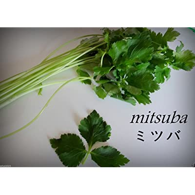 Mitsuba, Japanese parsley (1000 Seeds), Leaves, root and stems are used, ORGANIC : Garden & Outdoor
