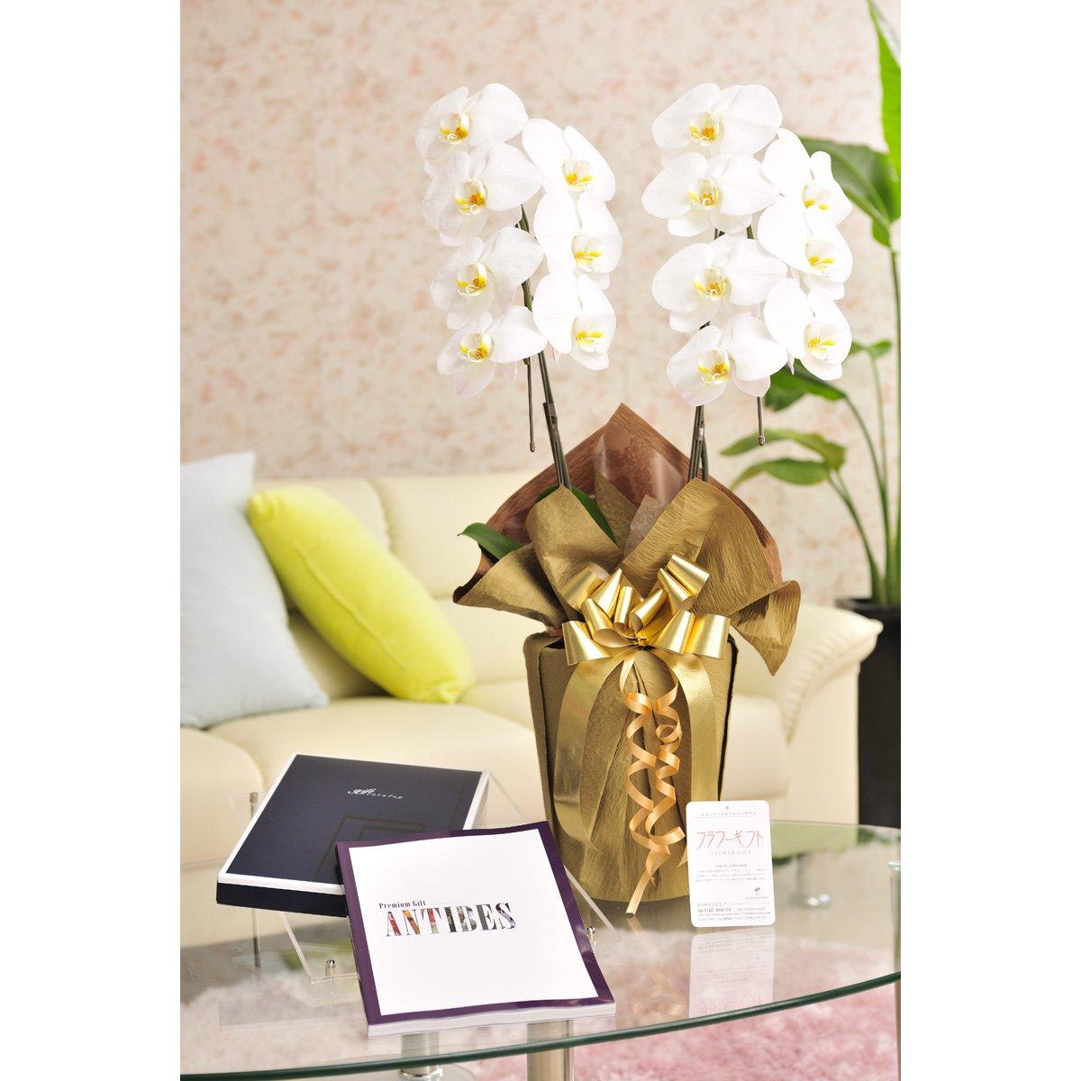 花とギフトのセット 胡蝶蘭 大輪2本立とカタログギフト(ミストラル/アンティーブ) B07DT9HP8X