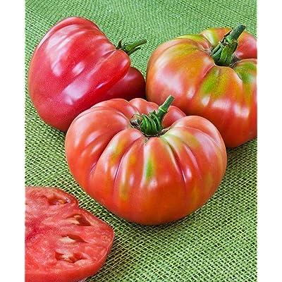 German Queen Tomato Seeds (50 Seeds) : Garden & Outdoor