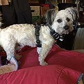 Amazon.com: Paz Tag Dog Tag Silenciador, Negro: Mascotas
