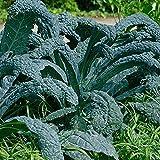 Everwilde Farms - 500 Lacinato Kale Seeds - Gold Vault Jumbo Seed Packet
