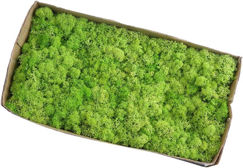 LOVIVER Musgo De Reno Preservado Artificial para Terrarios Jardines De Hadas Artes Y Manualidades 20 Colores - Fruta Verde