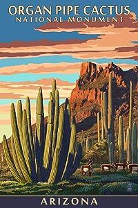 Organ Pipe Cactus National Monument, Arizona (9x12 Art Print, Wall Decor Travel Poster)