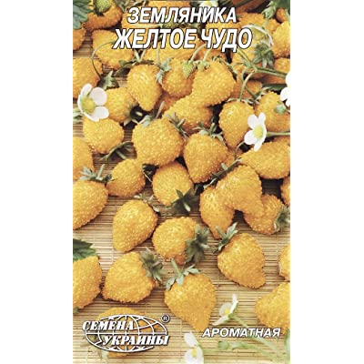 Strawberry Seeds Berries Seed Yellow miracle from Ukraine : Garden & Outdoor