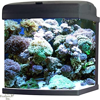 Jbj 28-Gallon Nano Reef Aquarium