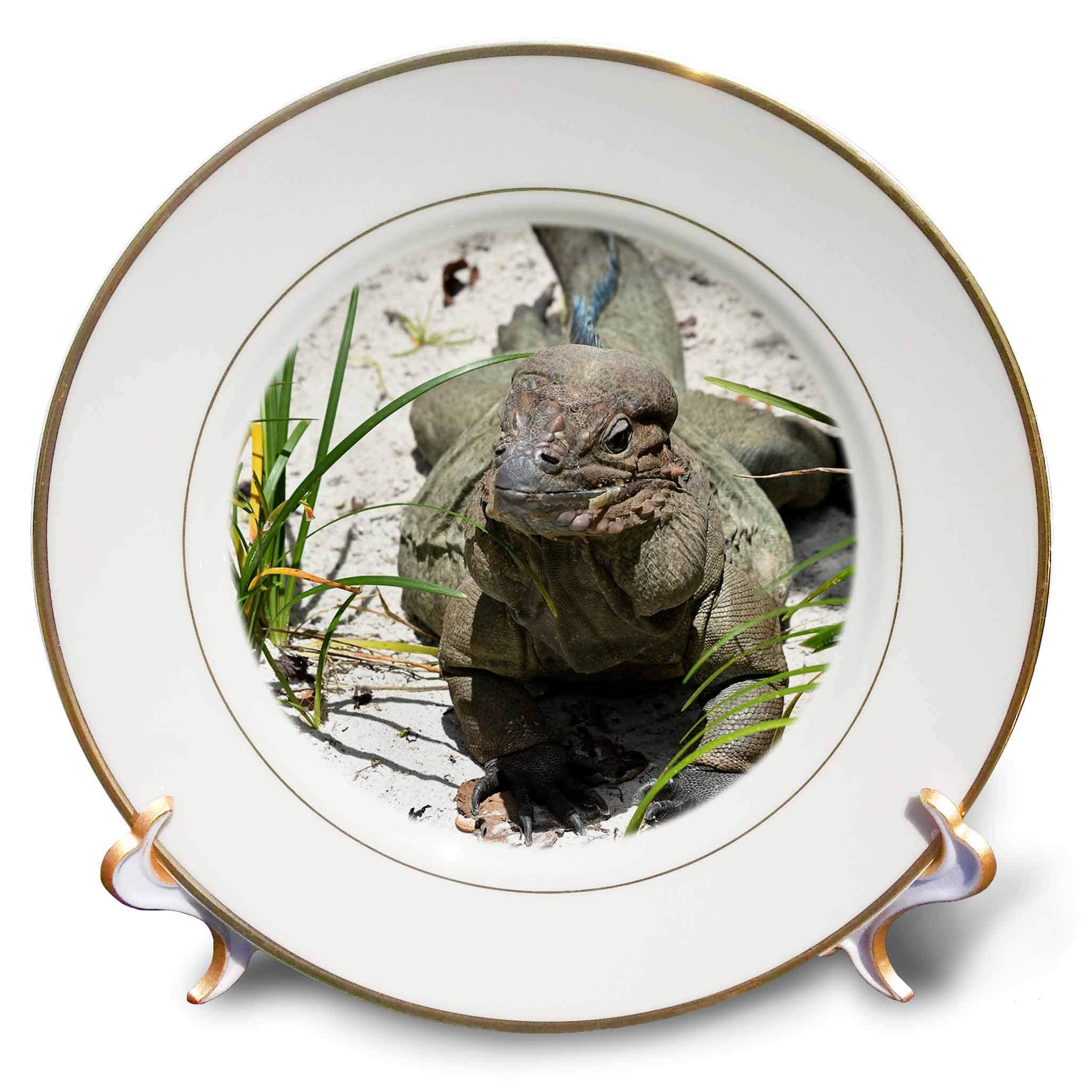3dRose Susans Zoo Crew Animal - Rhinocerous Iguana Lizard on Sand Animal - 8 inch Porcelain Plate (cp_294899_1)