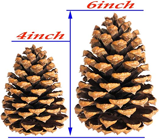 Natural Large Pine Cones for Crafts