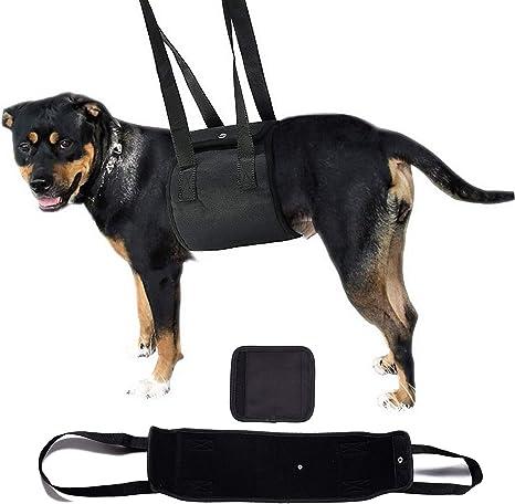 SELMAI - Arnés básico para la Cadera del Perro, para ...