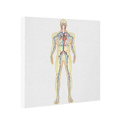 Amazon Com Abstract Art Canvas Anatomy Of Human Body And