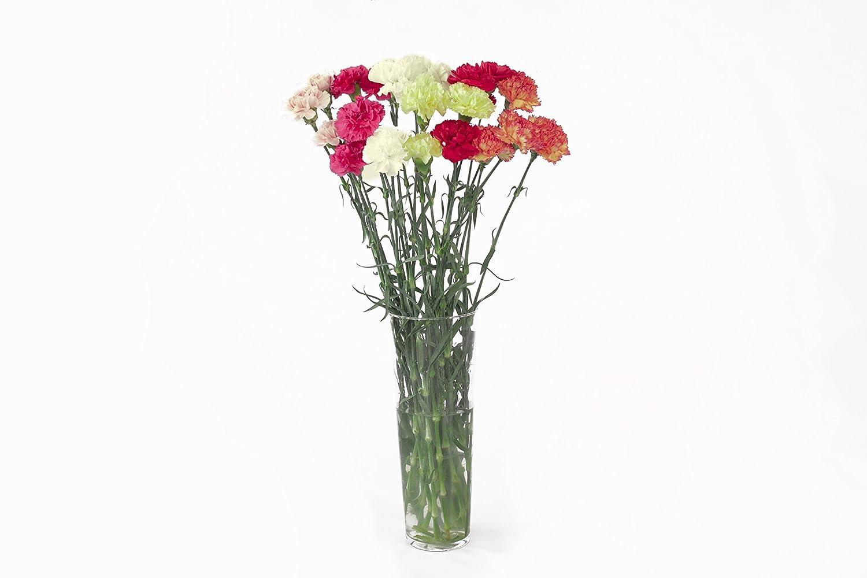 add733fadd5d Amazon.com   Fresh Natural Assorted Carnation Flowers - 23