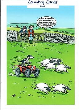 Arrondi A Le Mouton Humour Carte De Vœux Joyeux Anniversaire