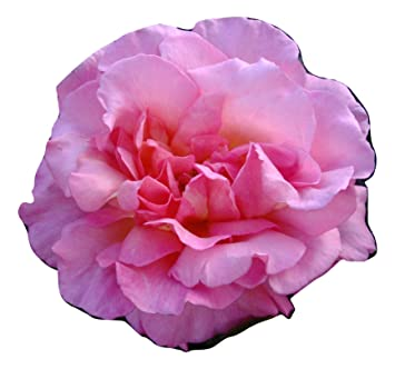 rose compassion memorial sympathy remembrance gifts for cat dog pet