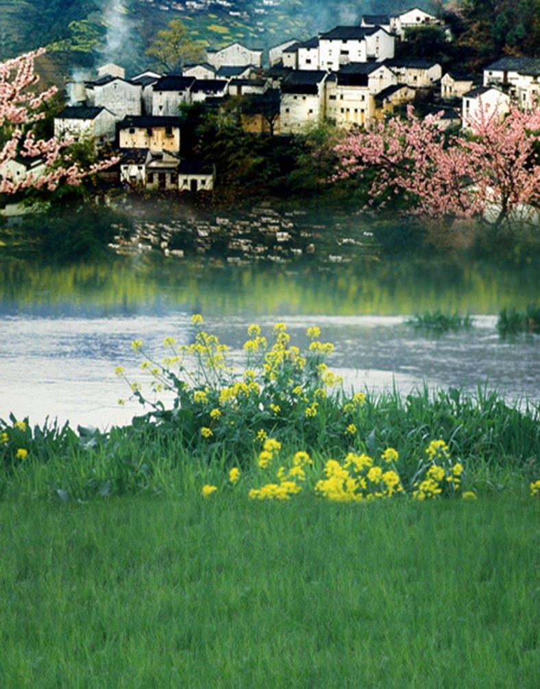 湖ピンク花家Green Grass写真Backdrops写真小道具Studio背景5 x 7ft   B01HEVZOWG
