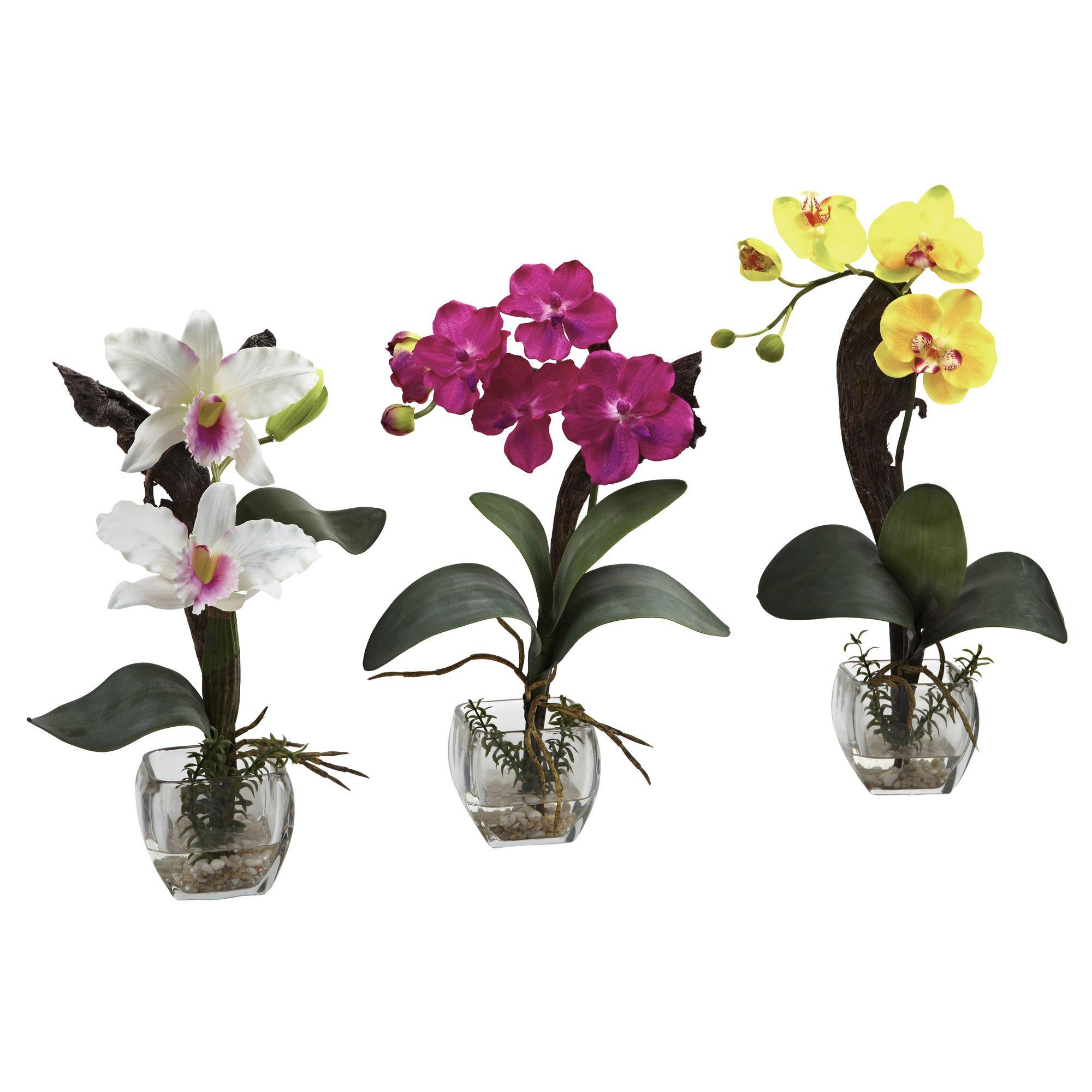 SKB Family Mini Cattleya Orchid Arrangement (Set Of 3) Natural Flower Miniature