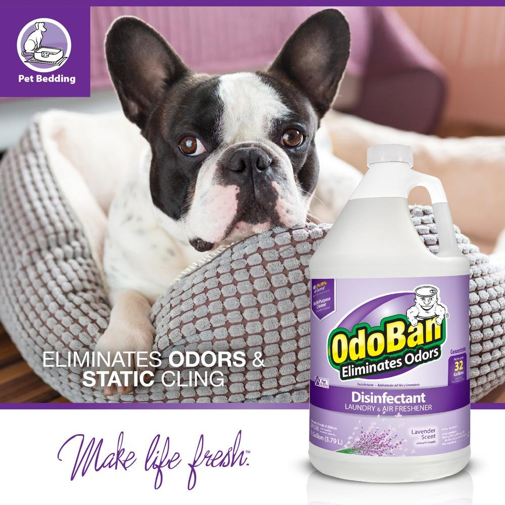 OdoBan Odor Eliminator and Disinfectant Concentrate, Lavender (2 Gal) by OdoBan (Image #6)