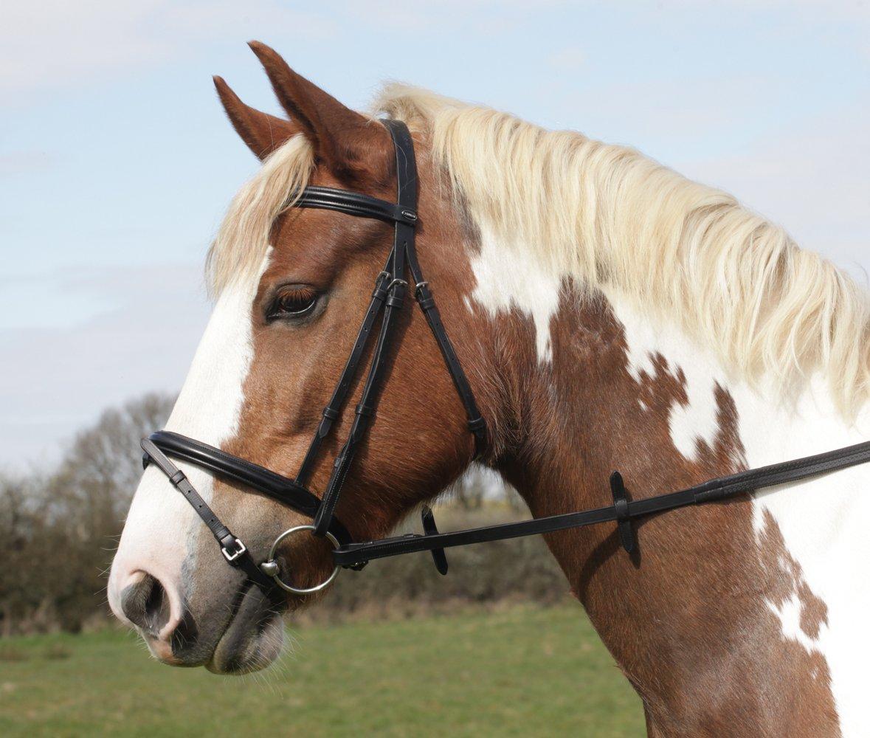 Heritage inglese del cavallo o pony briglia con colletto imbottito flash e naso e fascia