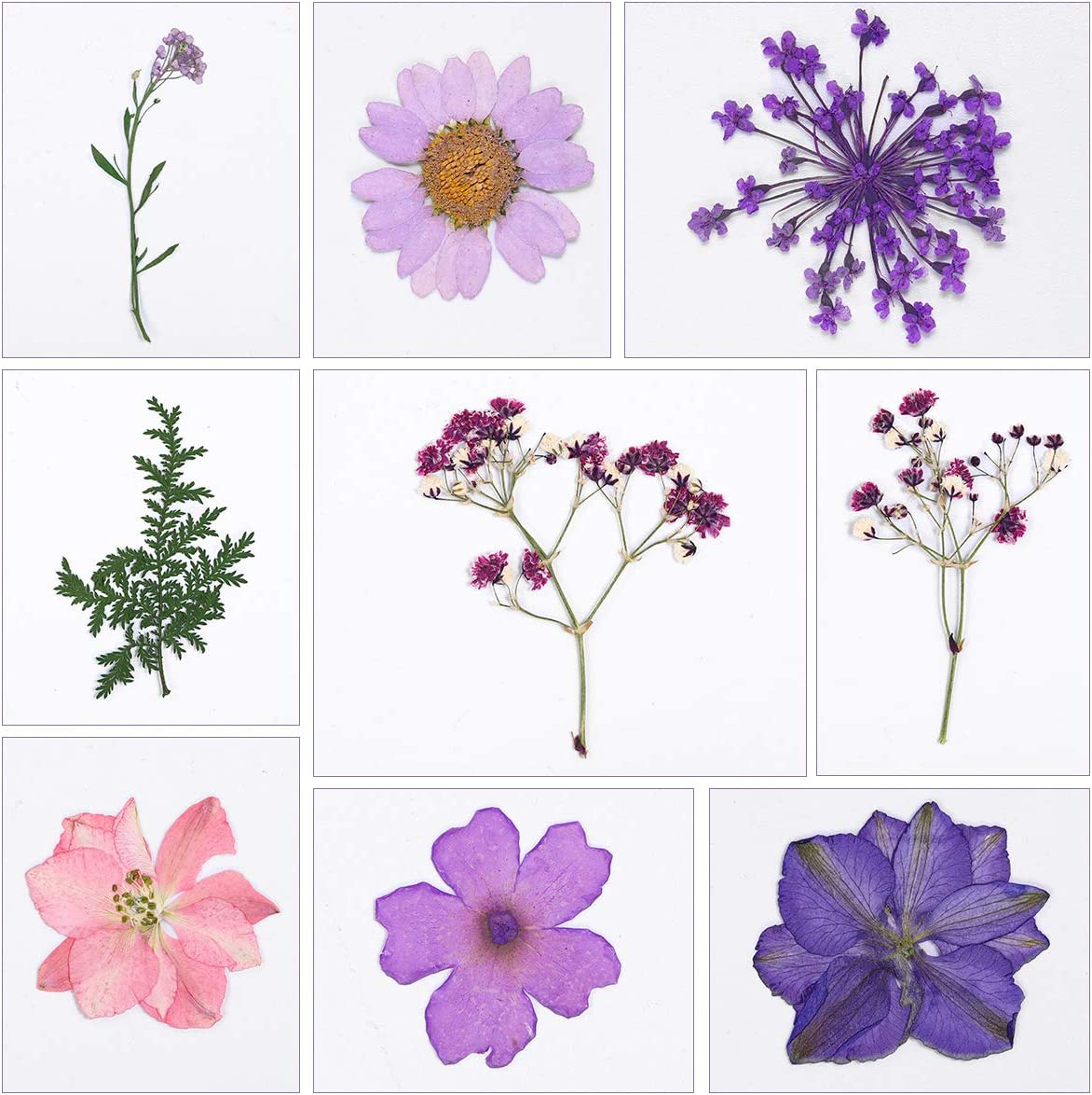 Real Dried Pressed Flowers, DIY Flower Pink Purple Larkspur Natural Pressed Flowers for Crafts Making, 30pcs
