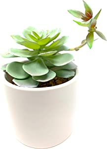 Werandah Artificial Succulent Plant in Ceramic Pot - Unique Fake Cactus! Faux Plant Indoor Garden Display for Your Home, Office, or Dorm, Ideal Gift