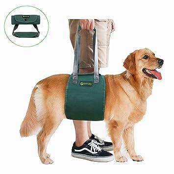 RockPet Soporte para Perros con Manija para la Ayuda Canina, Aprobado por los Veterinarios.