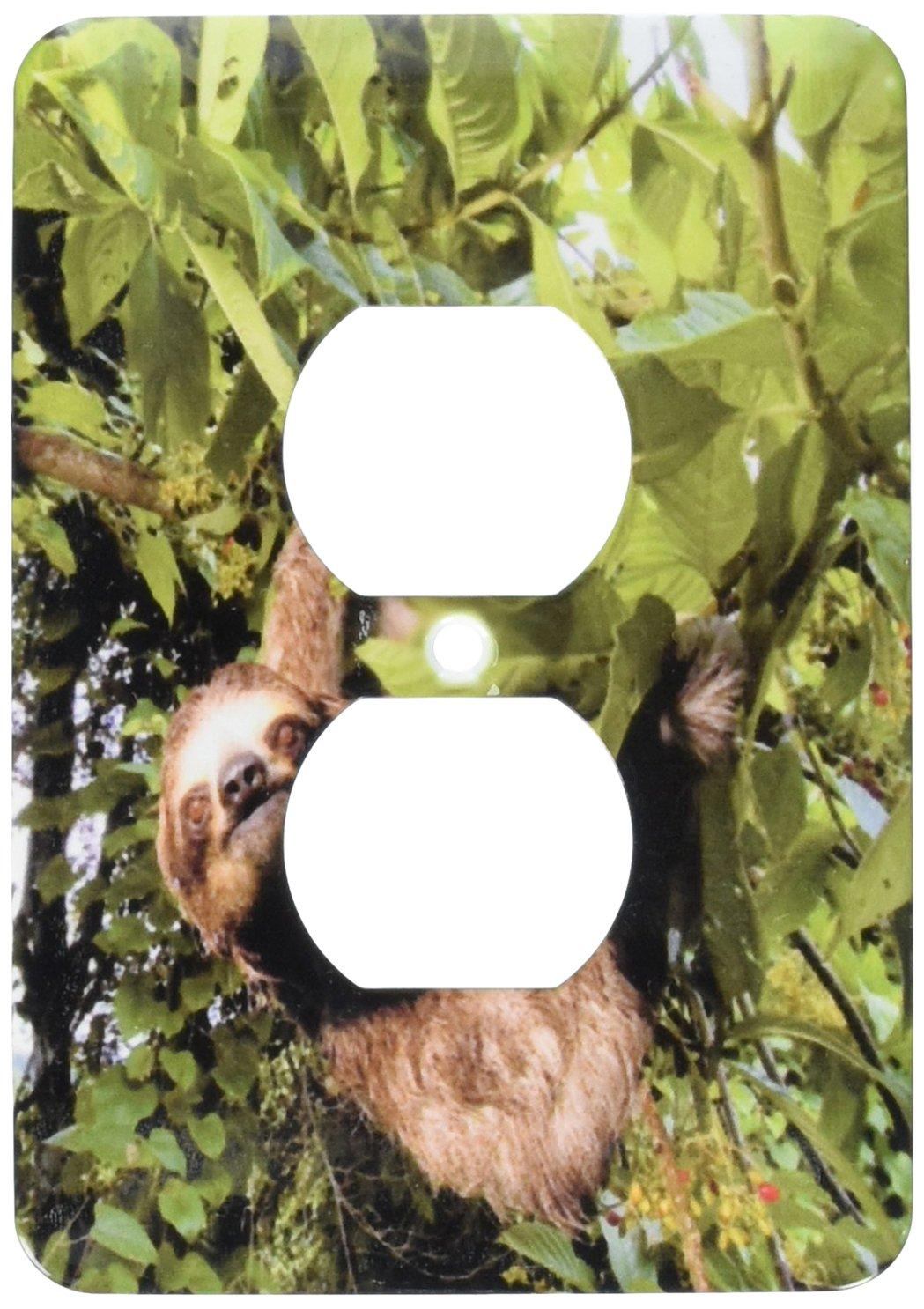 3dRose lsp_86913_6 Panama, Panama City, Three-Toed Sloth Wildlife Sa15 Czi0561 Christian Ziegler 2 Plug Outlet Cover