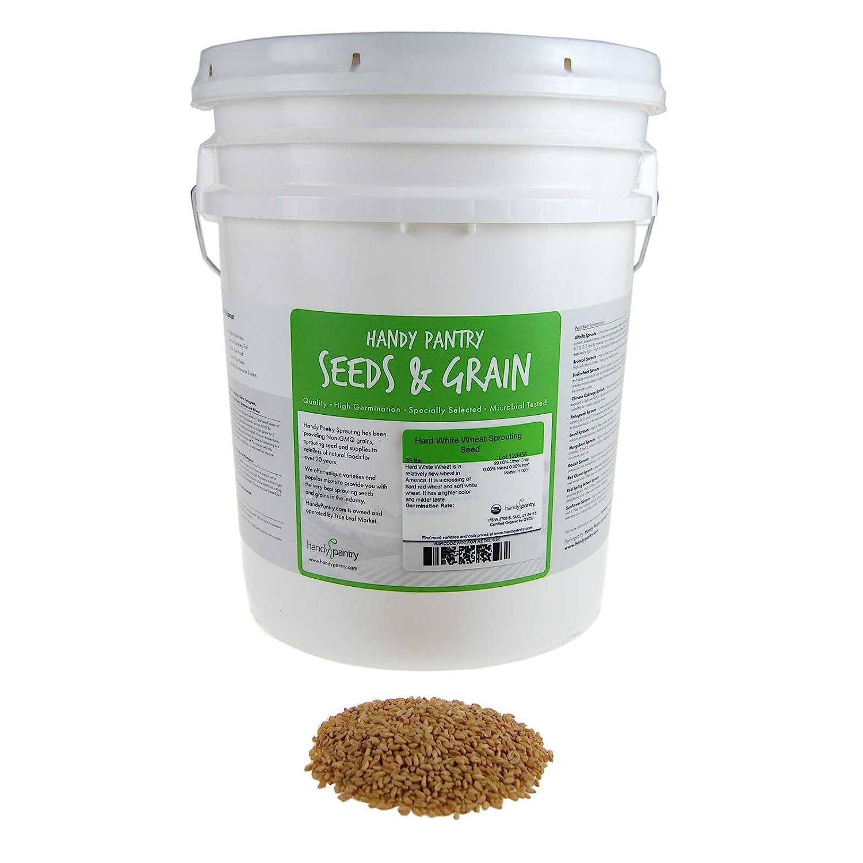 35 Lb Bulk Non-GMO Organic Whole Wheat Kernels - Hard White Wheat Grain & Heirloom Wheat Seeds for Hard White Wheat Berry Seeds for Sprouting, Organic Wheatgrass, Wheat Berry Bread, Winter Wheat Seed